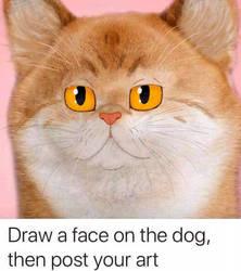 Dog face meme.