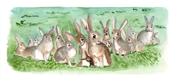 Rabbits by rockslide