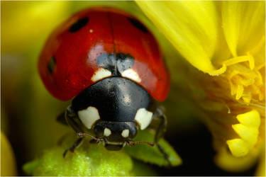 lovebug by nakitez
