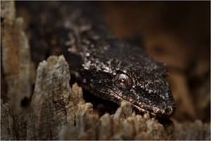 dark lizard by nakitez