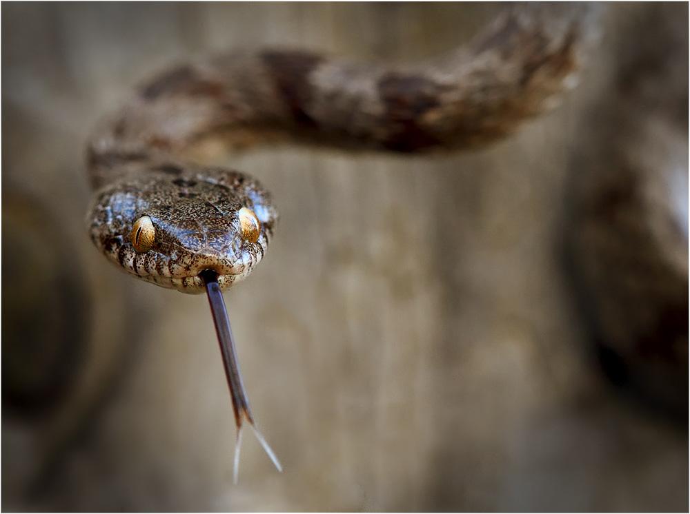 Cat snake by nakitez