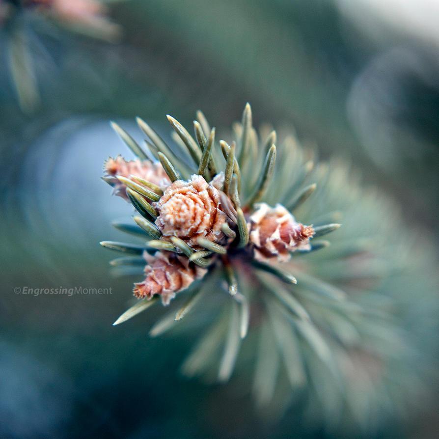 Winter Garden 33 by EngrossingMoment