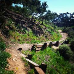 Pathway 36 by Llyzabeth