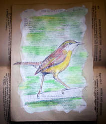 Altered Book - Carolina Wren by Llyzabeth