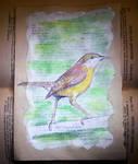 Altered Book - Carolina Wren