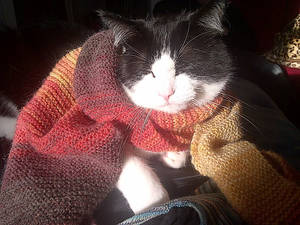 Dr. Who kitty