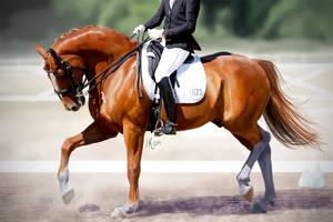 Dressage horse by BlackReason