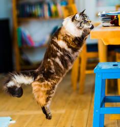 Jumping cat by atomkat