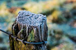 Frost-covered fence post