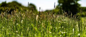 Meadow in May (2)
