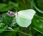 ... yet another butterfly