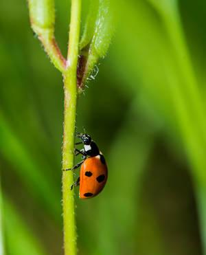 Ladybug on the run by atomkat