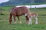 'Ah, Motherhood!'.... by TribblePom55