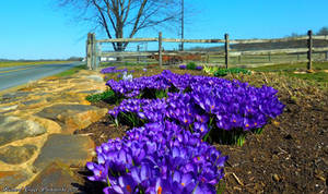 'Spring Has Sprung'....