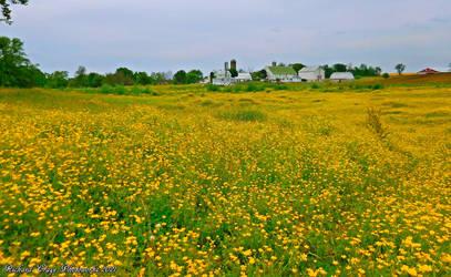 'Yellow is in Season'.... by TribblePom55
