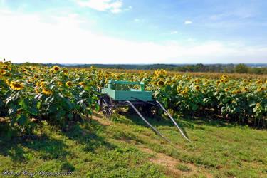 'Sunflower Express'....