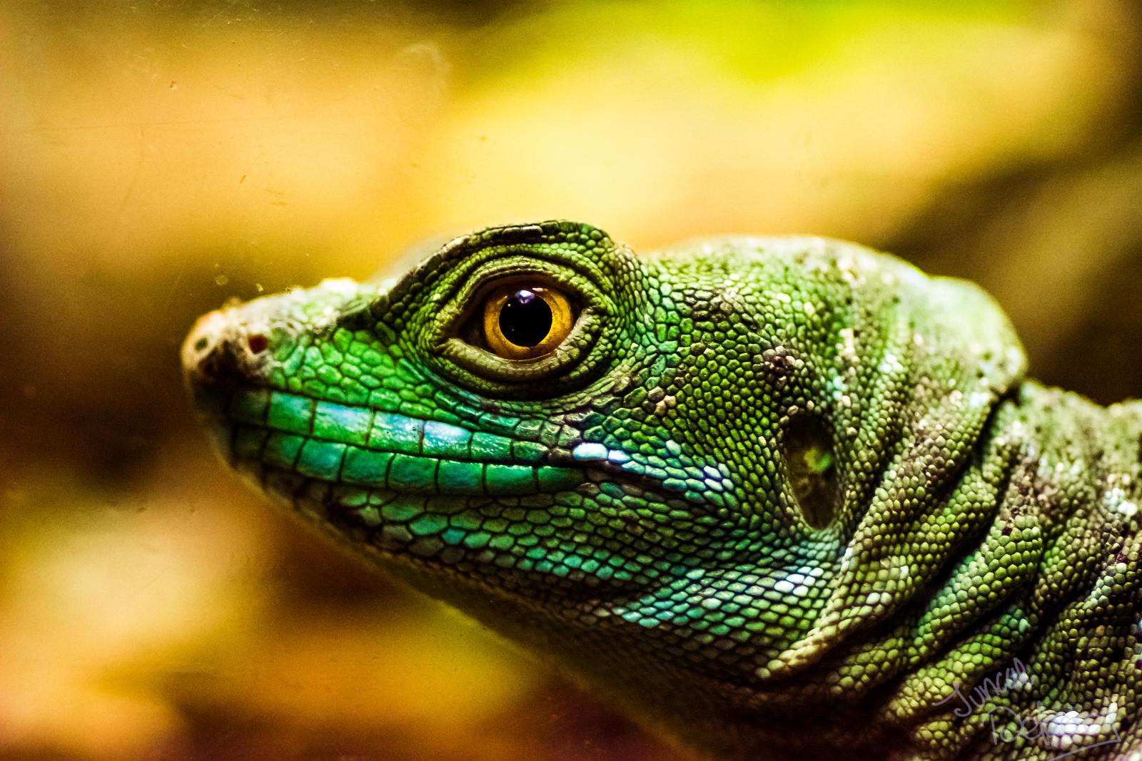 One Lizard by JuncalDelacroix