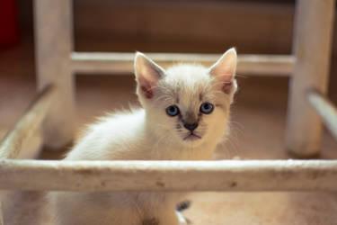 Kitty by JuncalDelacroix