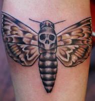death head moth by BrettPundt