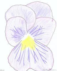 Violet by izalithium