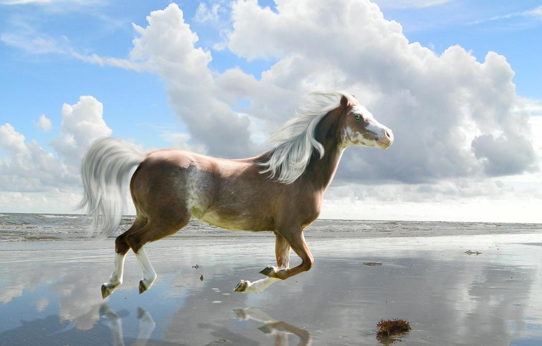 beach horse by sapphirecloud on deviantart