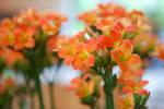 orange by emmakiss