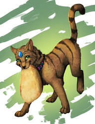 Cat with pancake