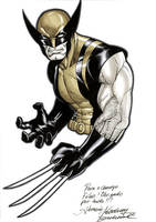Wolverine commission by Buchemi