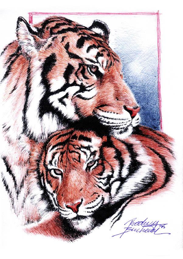Tigers by Buchemi