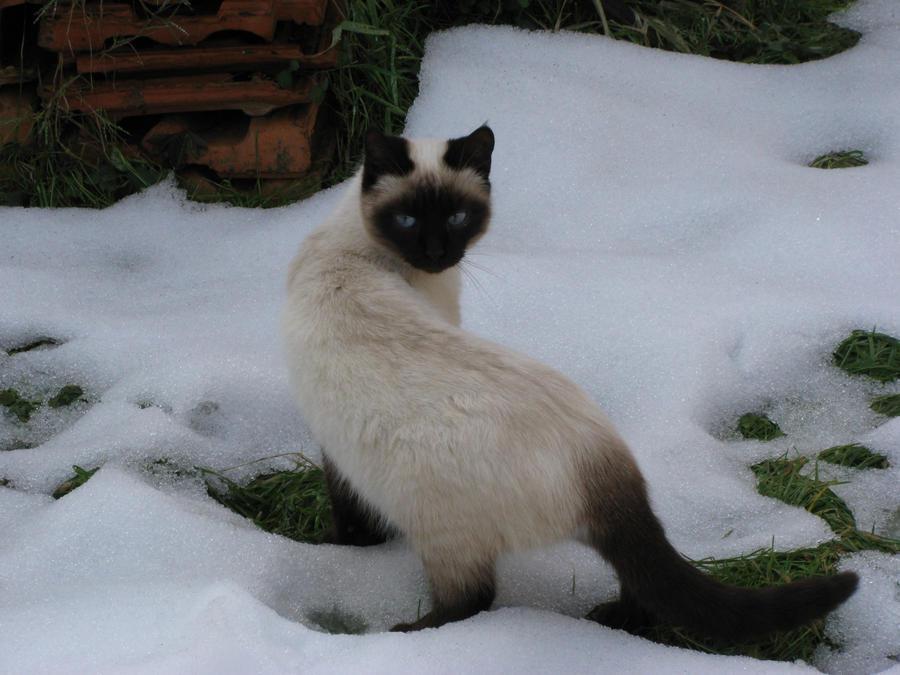 Snow Yuki 11 by Sanae78
