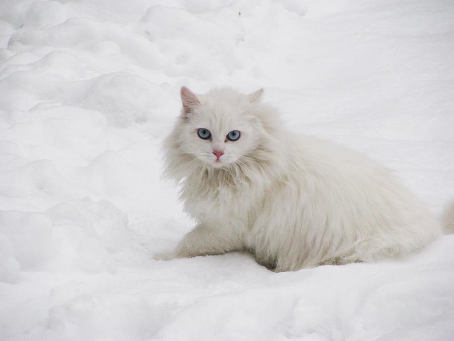 Cute snowbow by Sanae78