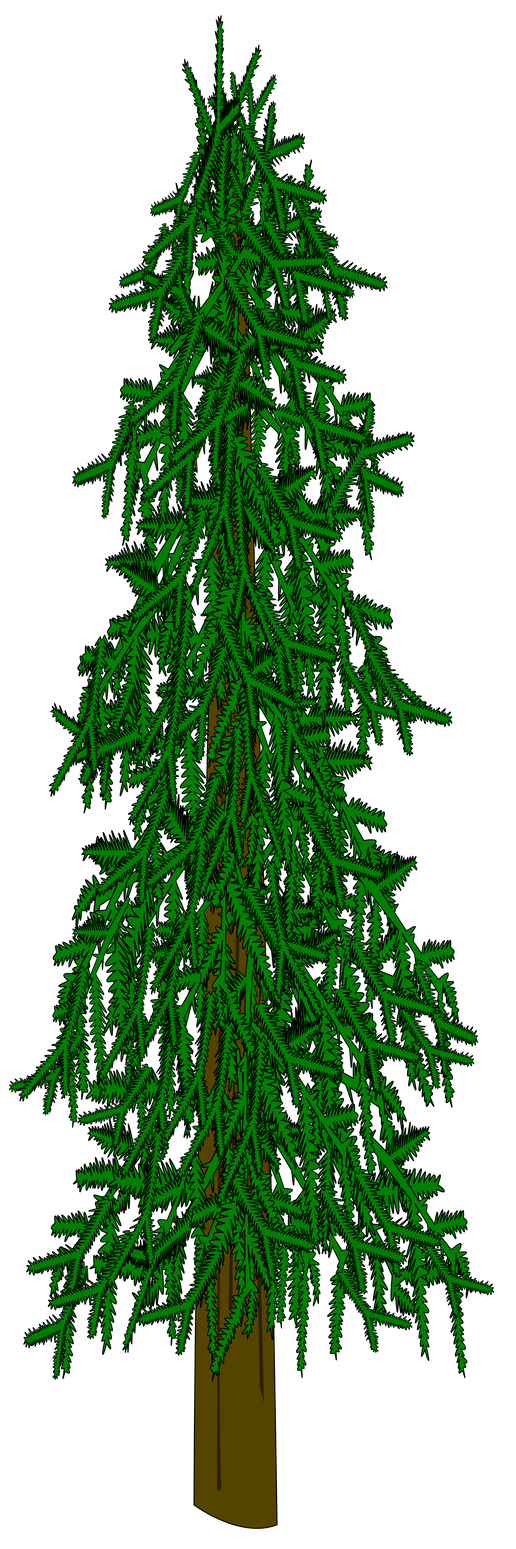Evergreen Tree Vector by dutchscout on DeviantArt