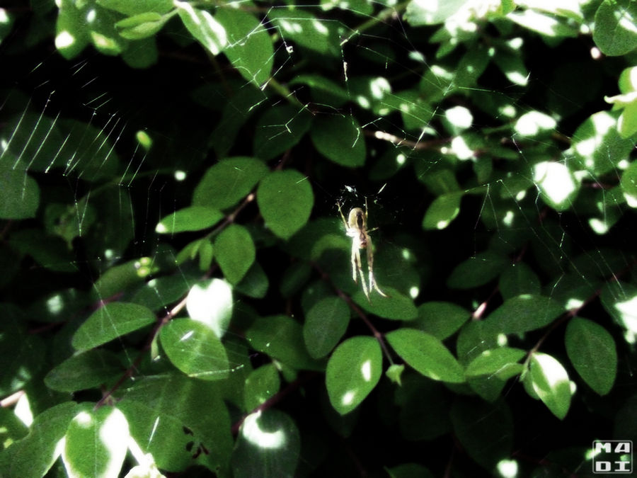 Spider On the Garden by MadOfPuppets