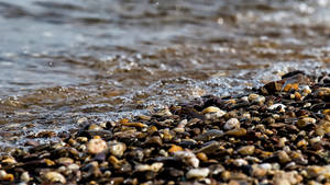 Shore pebbles M Scully Photography