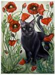 Cat in a poppy field