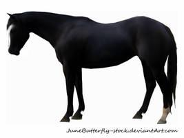 black horse by JuneButterfly-stock