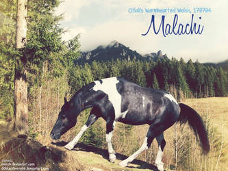 Malachi by JuneButterfly-stock