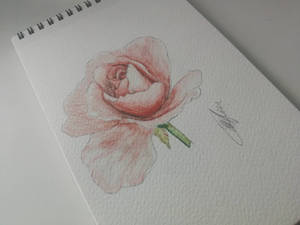 Some roses are rose