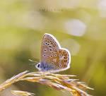 Sang Bleu by Nariscuss