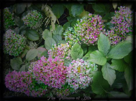 My Gardens Life