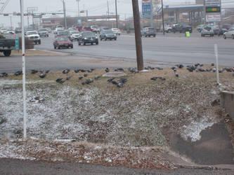 Snow Birds by Ironhold
