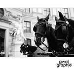 Vienna calling by Gwali