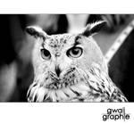 eagle owl by Gwali