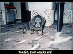 Kafel the cat eater