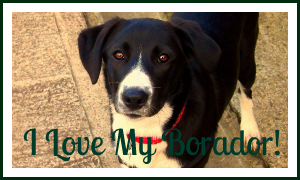 I Love My Borador! by Skiebear