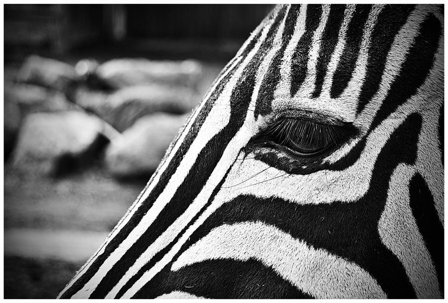 Zebra eye by BowmanDavid