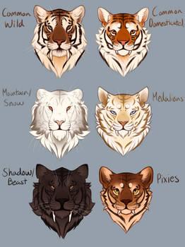 [THP] Panthera Tigris