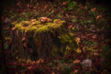Magic Forest by Nikonoclaste