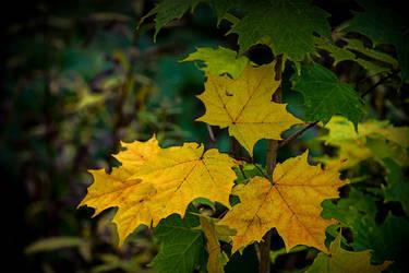 Early Autumn by Nikonoclaste