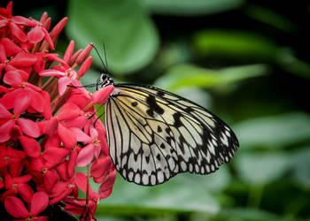 Butterflies Go Free by Nikonoclaste